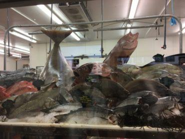 芸術的な魚