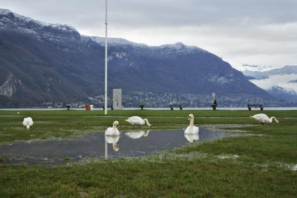 アヌシー湖と白鳥